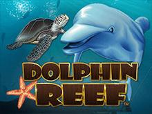 Риф Дельфина ото онлайн-казино